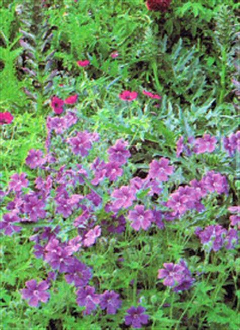 Lehmboden Im Garten by Lehmboden Im Garten Sandboden Und Sumpfgel 228 Nde