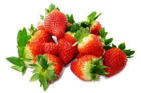 can pomeranians eat strawberries can pomeranians eat tuna strawberries pineapple bananas