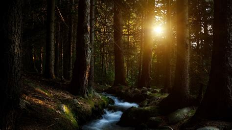 darkness beautiful dark themes sunset in forest 1600x900 wallpapers 1600x900 wallpapers pictures free download