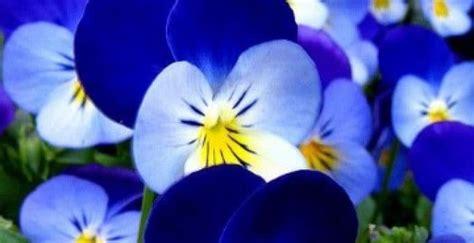 imagenes de flores azules brillantes existen flores azules imagenes del medio ambiente