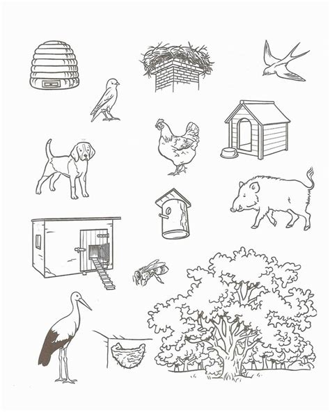 printable animal homes free animal homes worksheets for kindergarten habitats