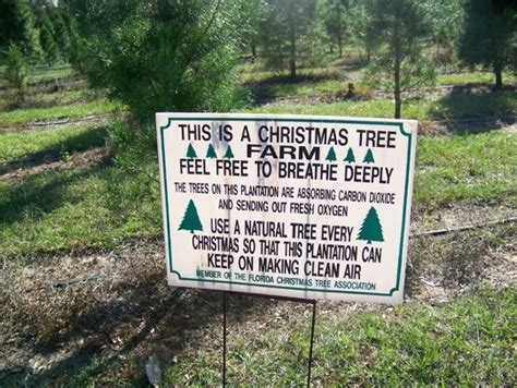 christmas tree farm miltin fl tree farms in florida trekaroo