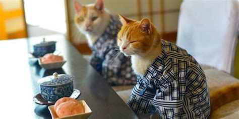 cat wallpaper japan cats in kimonos are a thing in japan bored panda