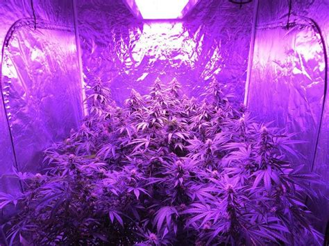 lights to grow indoor bossled 1600w spectrum led grow light bossled