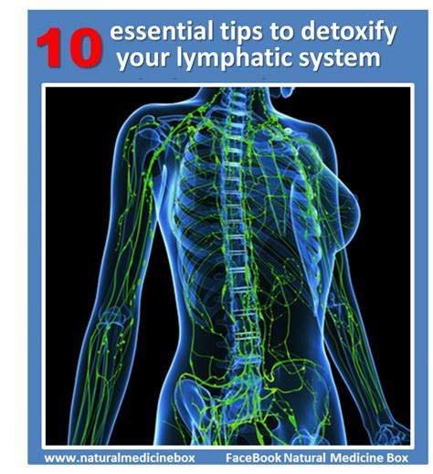 How To Detox Your Lymphatic System Naturally by 10 Essential Tips To Cleanse Your Lymphatic System