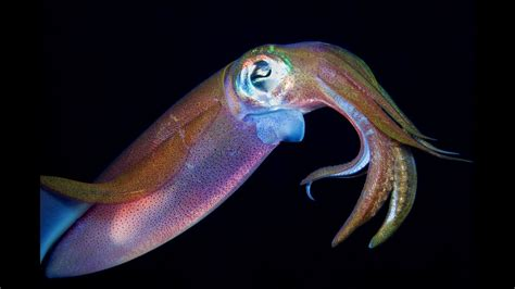 what color are squids squid inspired invisibility stickers could help soldiers