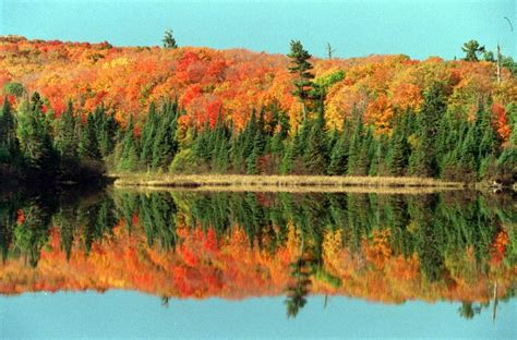 of minnesota colors minn dnr says fall color will be spectacular this year