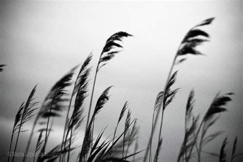 imagenes en blanco y negro hispter blanco y negro murray magazine