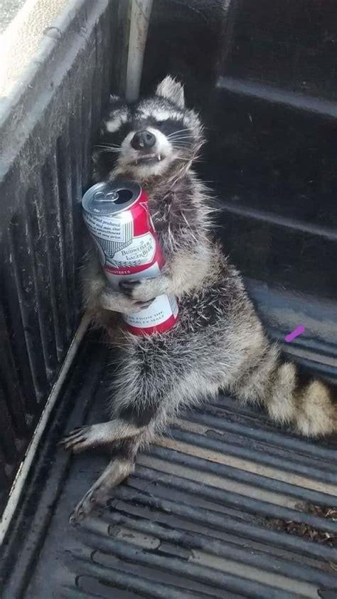 alcohol memes  pics