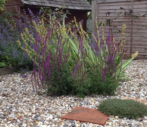 pictures of a garden suffolk gravel garden garden designer based in brighton