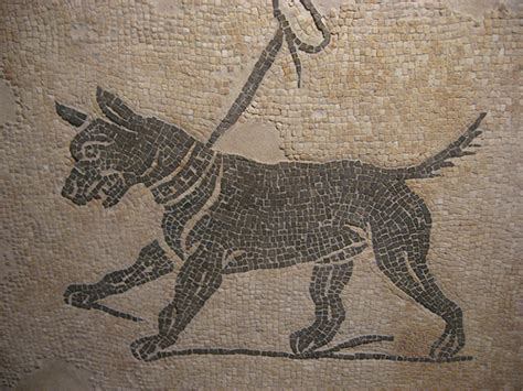 ancient dogs ancient guard dogs breeds picture