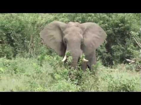 download film dokumenter fauna pictures fauna africana