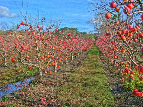 apple orchard back forty west cider dinner edible manhattan