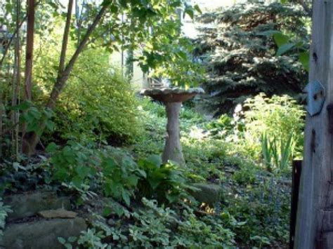 Backyard Wildlife Habitat by Your Backyard Wildlife Habitat Begin In To