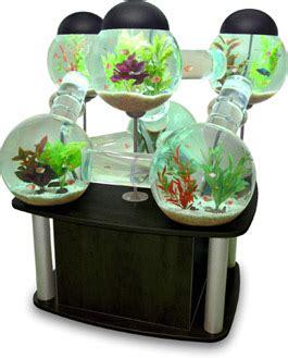 kule akvarium akvariefisk