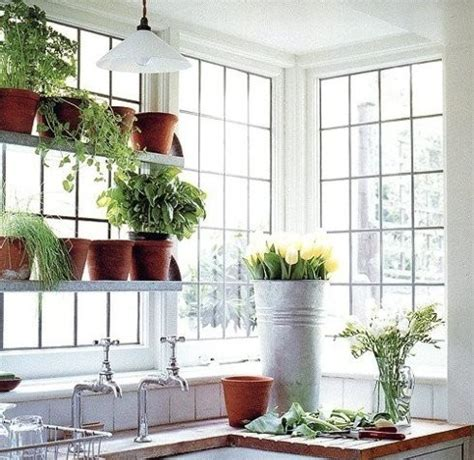 60 best herbs and vegetables grow them inside images on