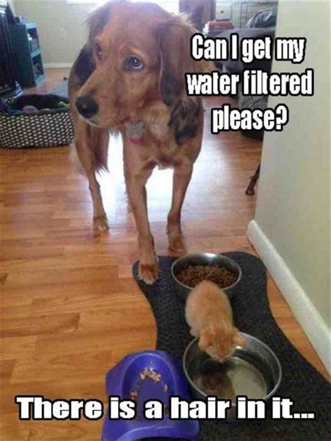 where can i get my puppy can i get my water filtered humor