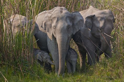 elephant biography in hindi wild indian elephant dies trying to escape captivity