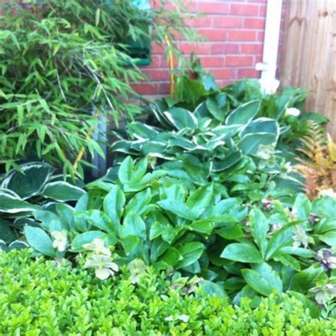shade loving foliage plants lush shade loving plants gardening tips garden ideas