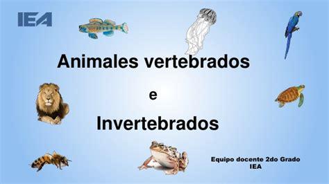 imagenes de animales vertebrados wikipedia animales vertebrados e invertebrados
