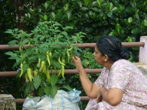 Kitchen Garden Kerala by