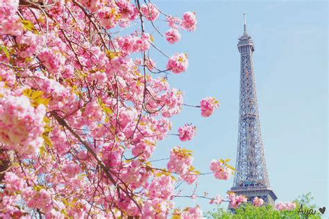 4 Di Jepang 6 Destinasi Wisata Untuk Menikmati Keindahan Bunga Selain Di Jepang Indonesia Juga Ada