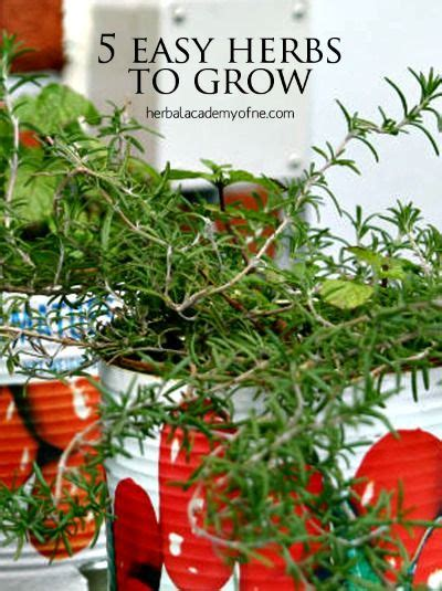 1000 images about growing herbs in the garden on 1000 images about herb gardening on pinterest gardens
