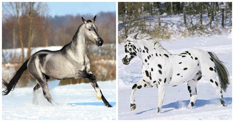 unusual colors pictures of the most beautiful and uniquely colored horses