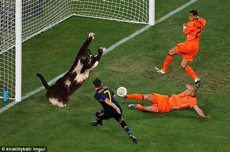 Football Cat Meme - cat who sticks his paws in the air becomes latest web