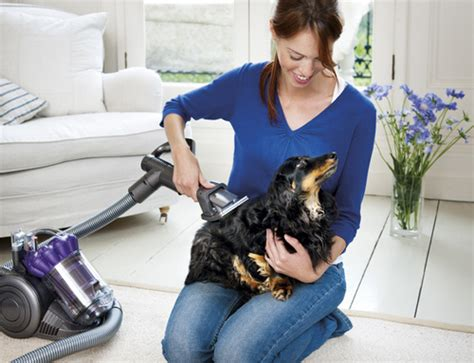 dog house vacuum cleaner dyson groom tool will comb and vacuum your dog s coat