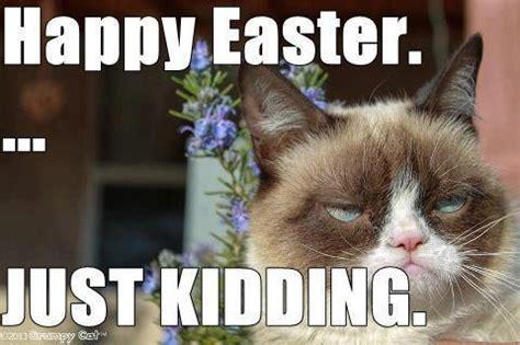 Funny Easter Memes - grumpy cat meme dauson stimpson gagnon