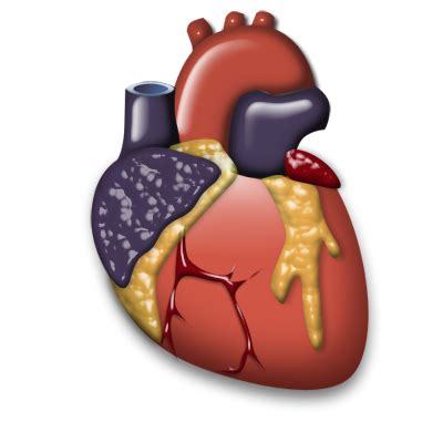 cardiology organ heart icon