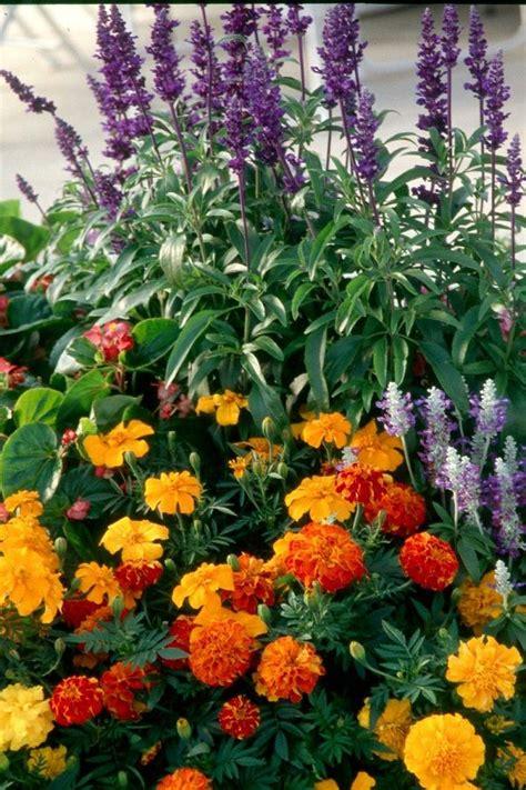 six plants that repel mosquitoes geraniums basil