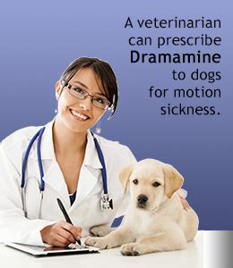 dramamine for dogs is dramamine safe for dogs
