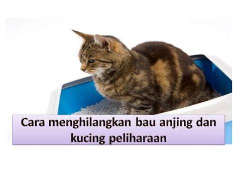 Menghilangkan Bau Di Kandang Kucing cara menghilangkan kebiasaan kucing buang kotoran semba