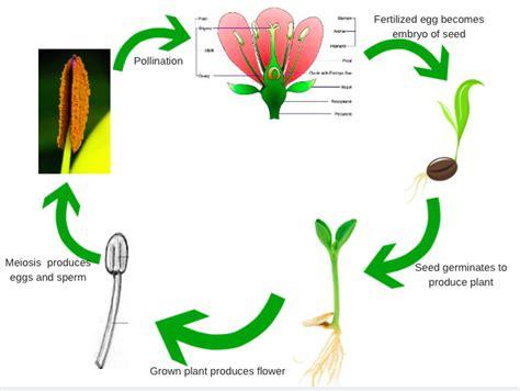 How Plants Reproduce Worksheet