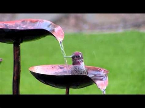 hummingbirds play  homemade bird bath youtube diy