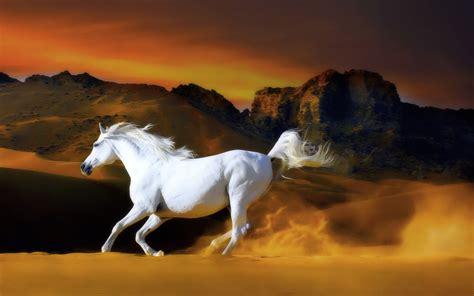 imagenes vectores caballos image gallery imagenes de caballos