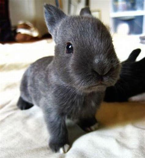 like a bunny top 10 cutest bunny rabbit pictures truetop10 com