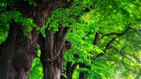 define tree wallpapers de naturaleza full hd taringa