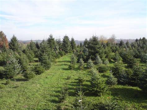 top 28 weihnachtsbaum selber schlagen bonn