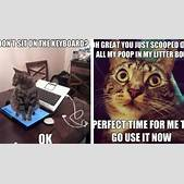 20 Cat Logic Me...