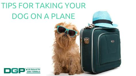 taking a on a plane tips for taking your on a plane dgp for pets