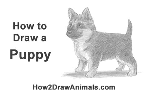 how to draw a german shepherd puppy how to draw a puppy german shepherd