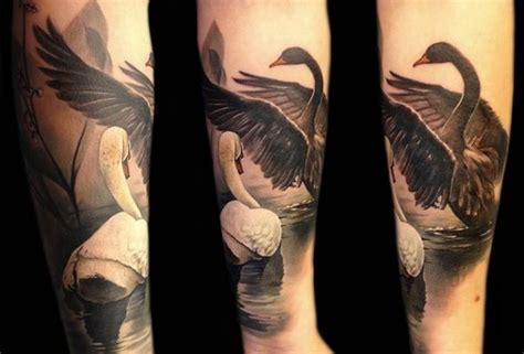 black swan tattoo swans swan swans and