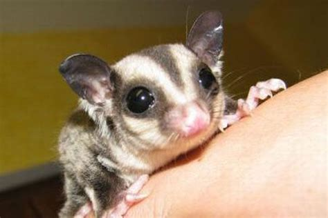 gliders images  pinterest