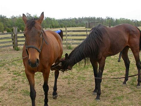 Hourse Matting by Horses 2004 Flickr Photo