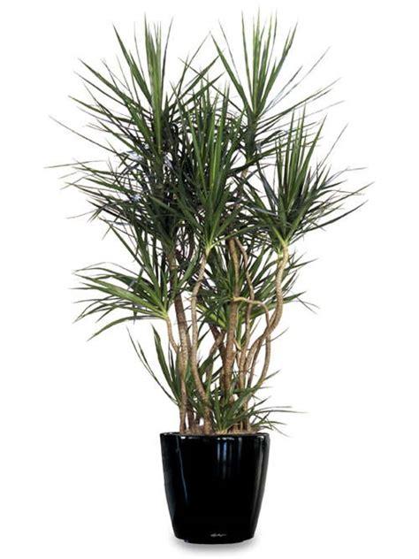 plantas de interior sin luz plantas de interior sin flor para animar la casa o tu oficina