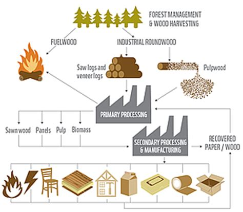 How To Make Paper Products - industry key to conserving forests as demand for wood