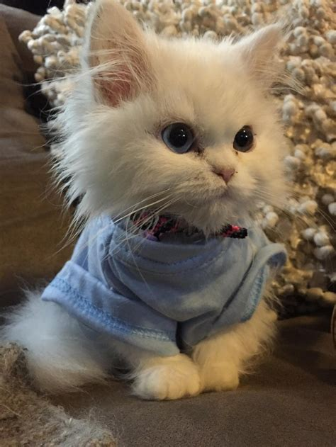 overly adorable kittens  brighten  day